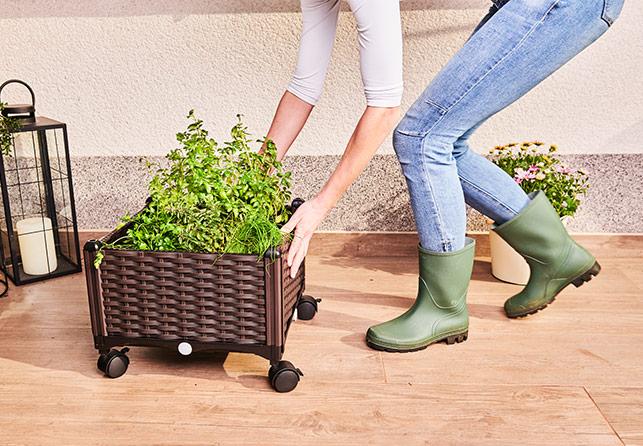 Kuti për mbjellje Grow